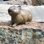 Estes Park Scavenger Hunt: Pikas in the Park