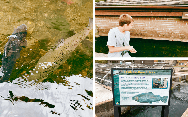 10 fun things to do in branson mo with kids for Branson fish hatchery
