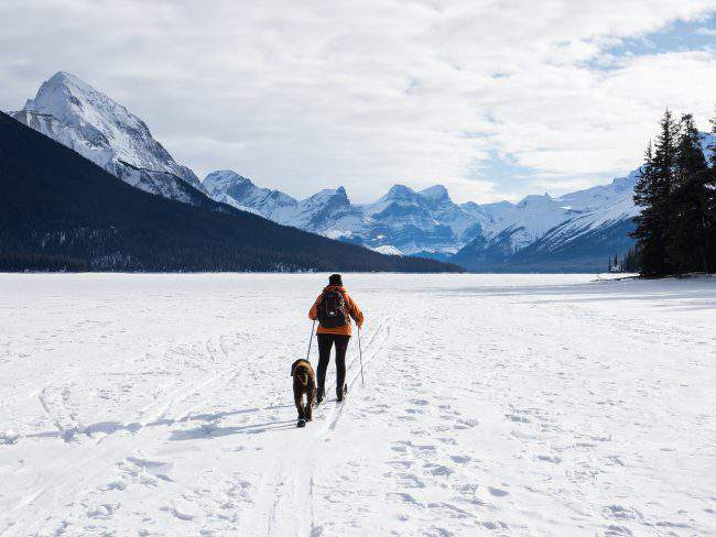 Person and dog skiing across a snowy plain.