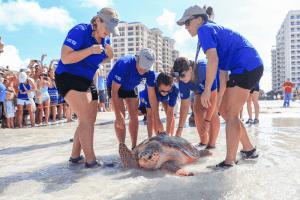 Turtle release near Clearwater Beach, Florida