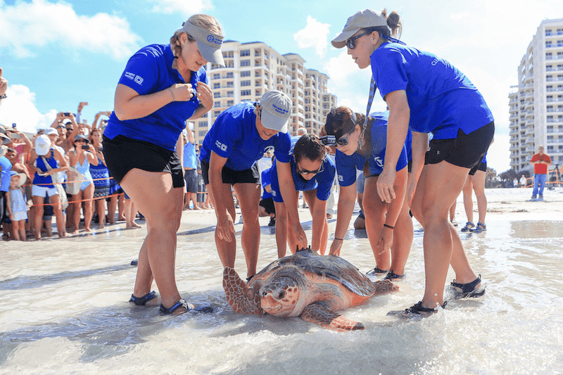 Turtle release near Clearwater Beach, Florida