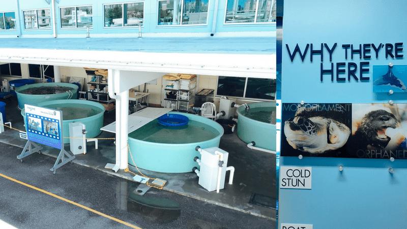 Sea Turtle Rehabilitation tanks at Clearwater Marine Aquarium