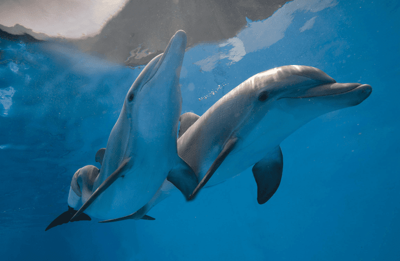 2 Dolphins - Winter and Hope from Clearwater Marine Aquarium