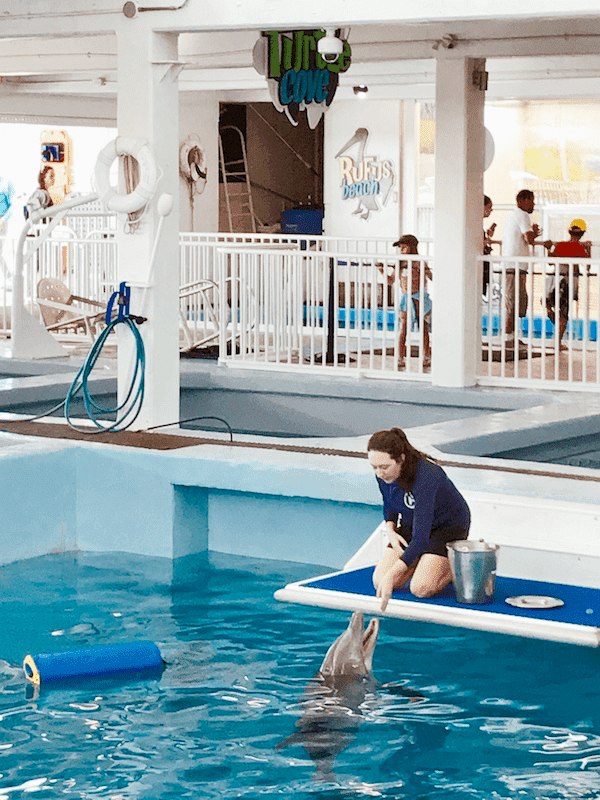 Trainer and dolphin in the water