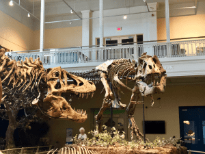Dinosaurs in Their Time - T Rex