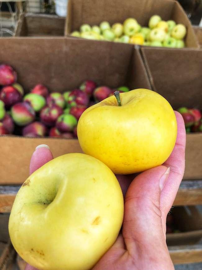 apple picking in Kansas CIty KS
