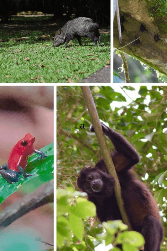 Costa Rican Animals at La Selva
