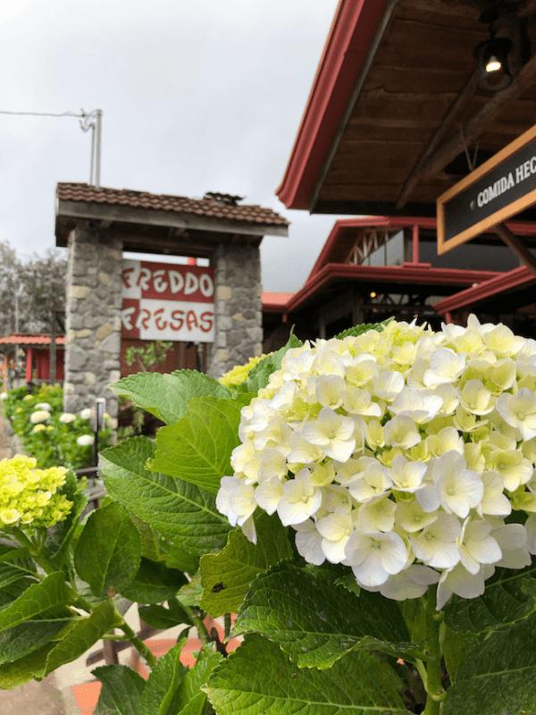 Freddo Fresas restaurant, hydrangea