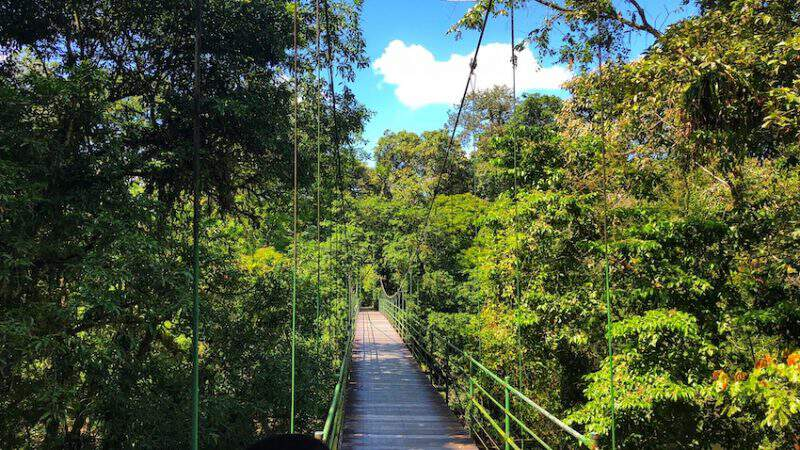 La Selva biological park bridge