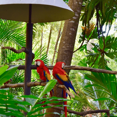 Day Trips From San Jose, Costa Rica To Take with Kids