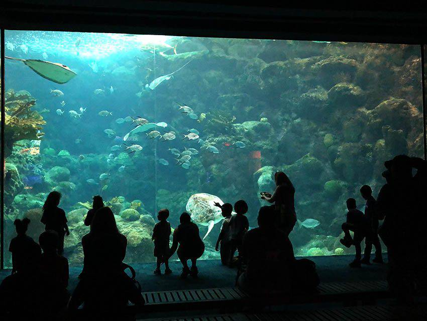 Florida Aquarium Coral Reef Exhibit