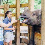 Indian Rhino Feeding Zoo Tampa