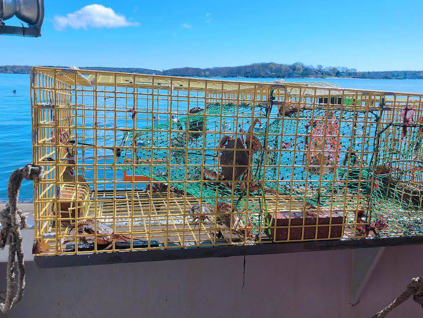 Lobster Pots with crabs