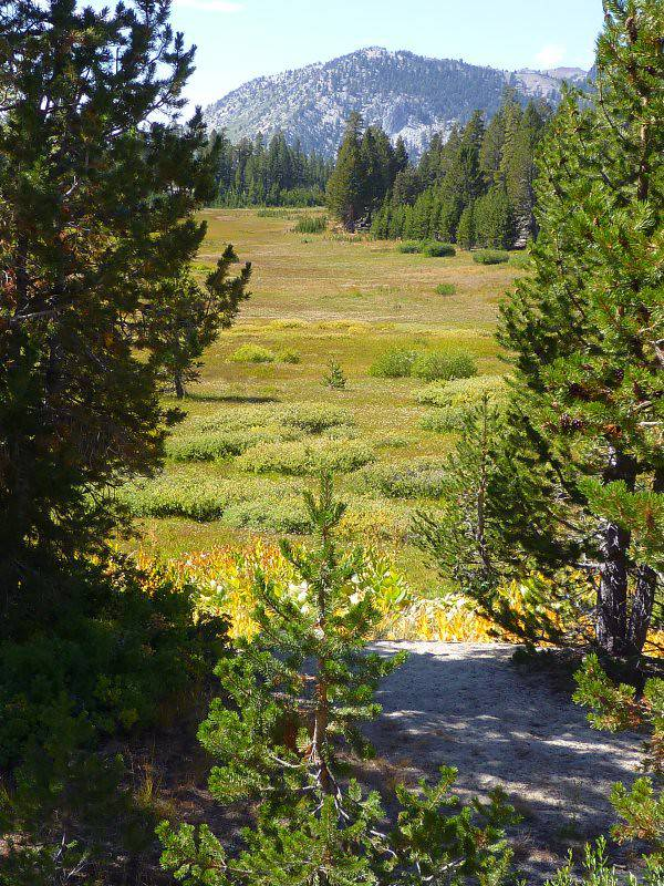 North Lake Tahoe Hiking Trails - Meadows Interpretive Trail