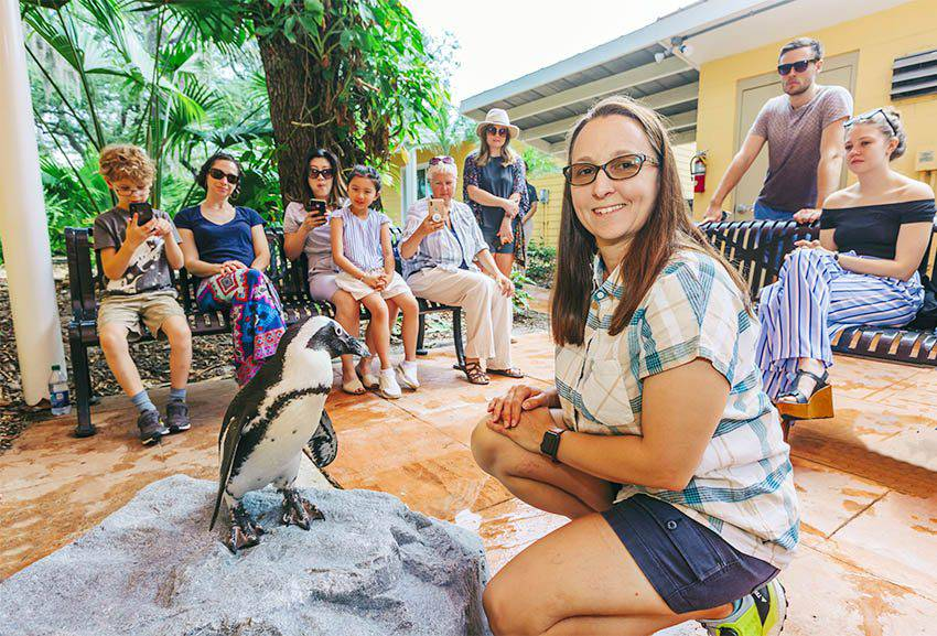 African Penguin Encounter