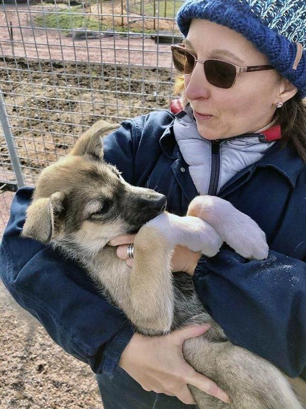 Alaskan husky pup