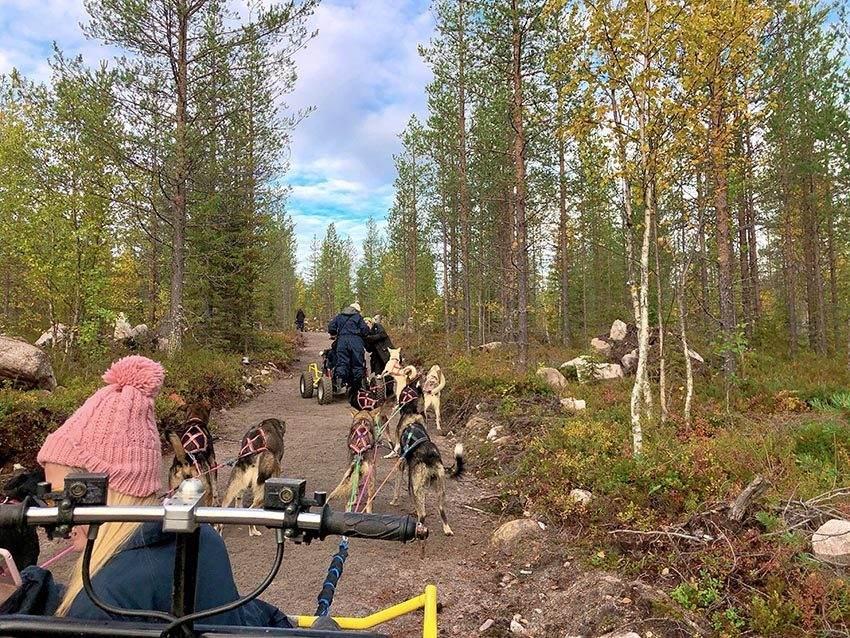 Bearhill Hisky Safari Rovaniemi