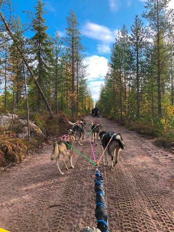 Finnish dog sledding