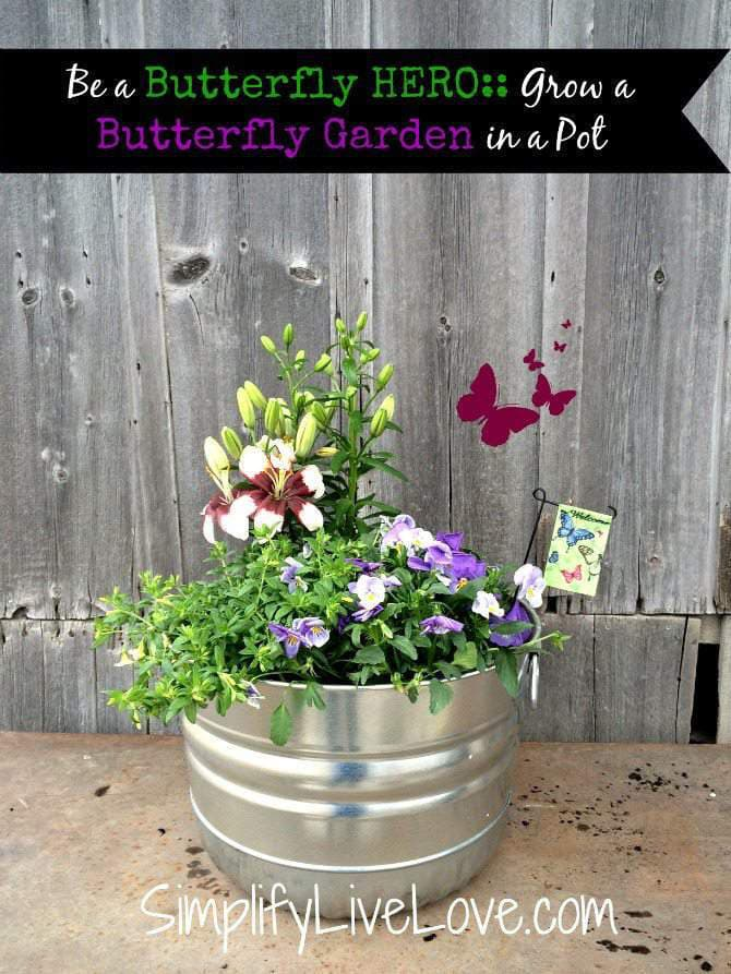 butterfly garden tutorial