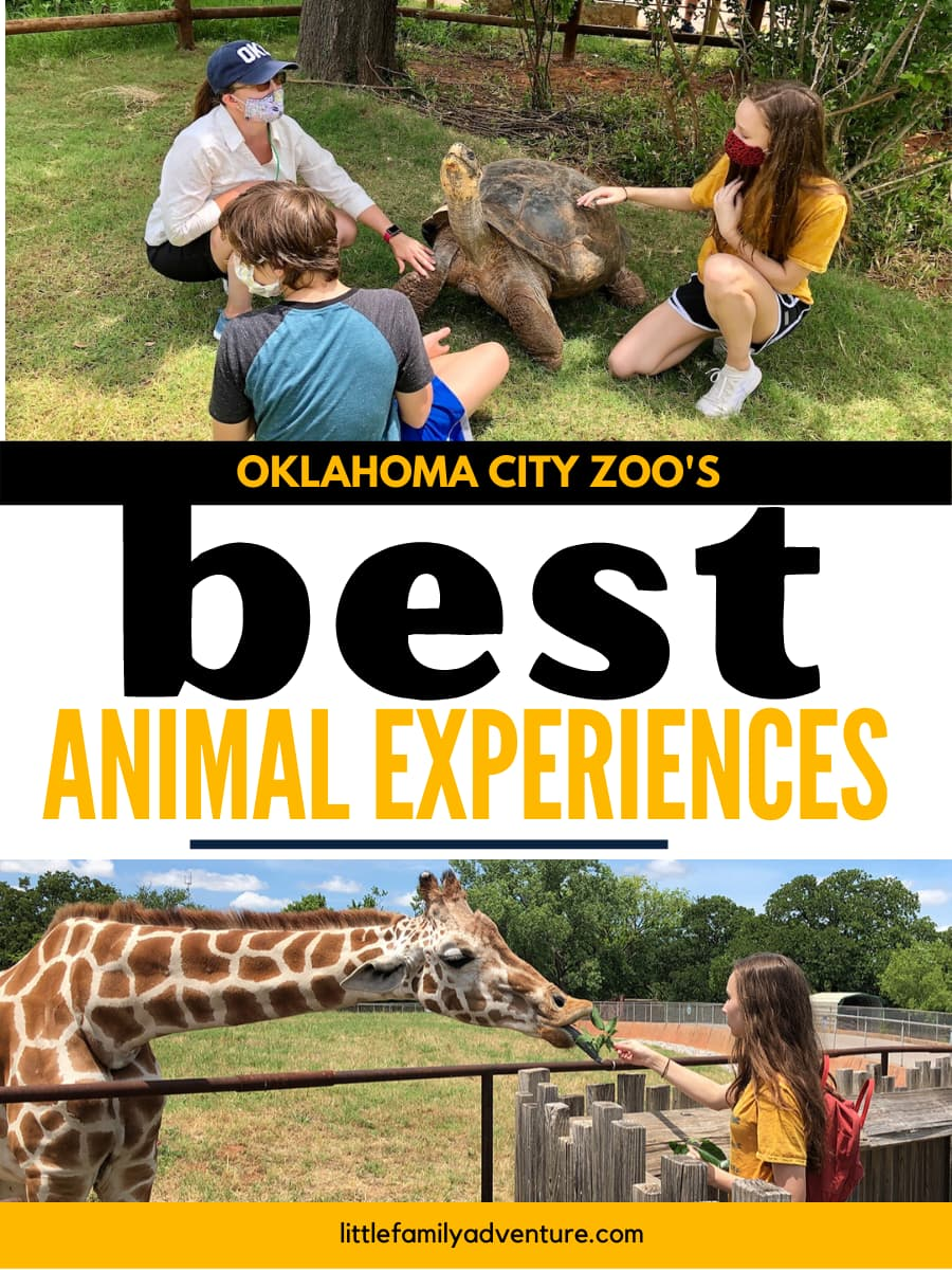 best animal experiences graphic at the OKC Zoo