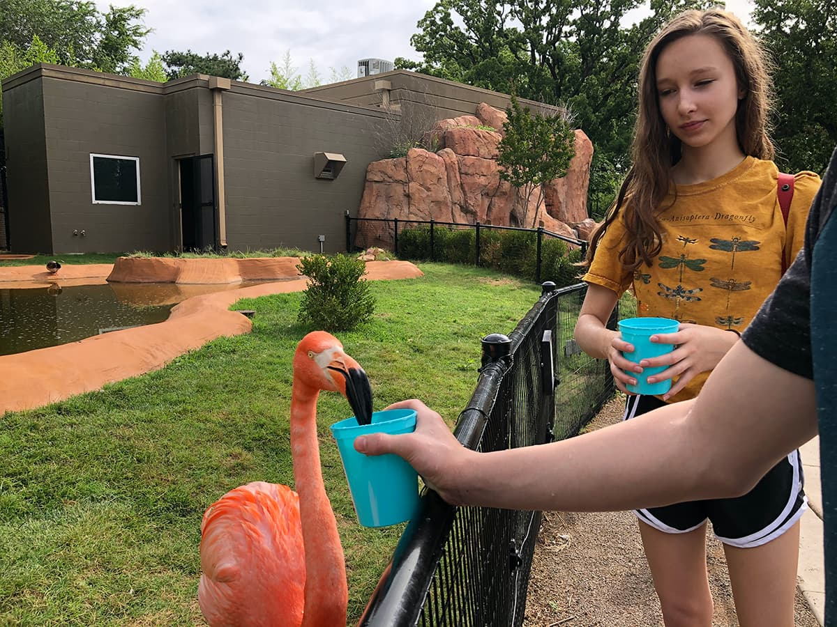teens feeding a flamingo