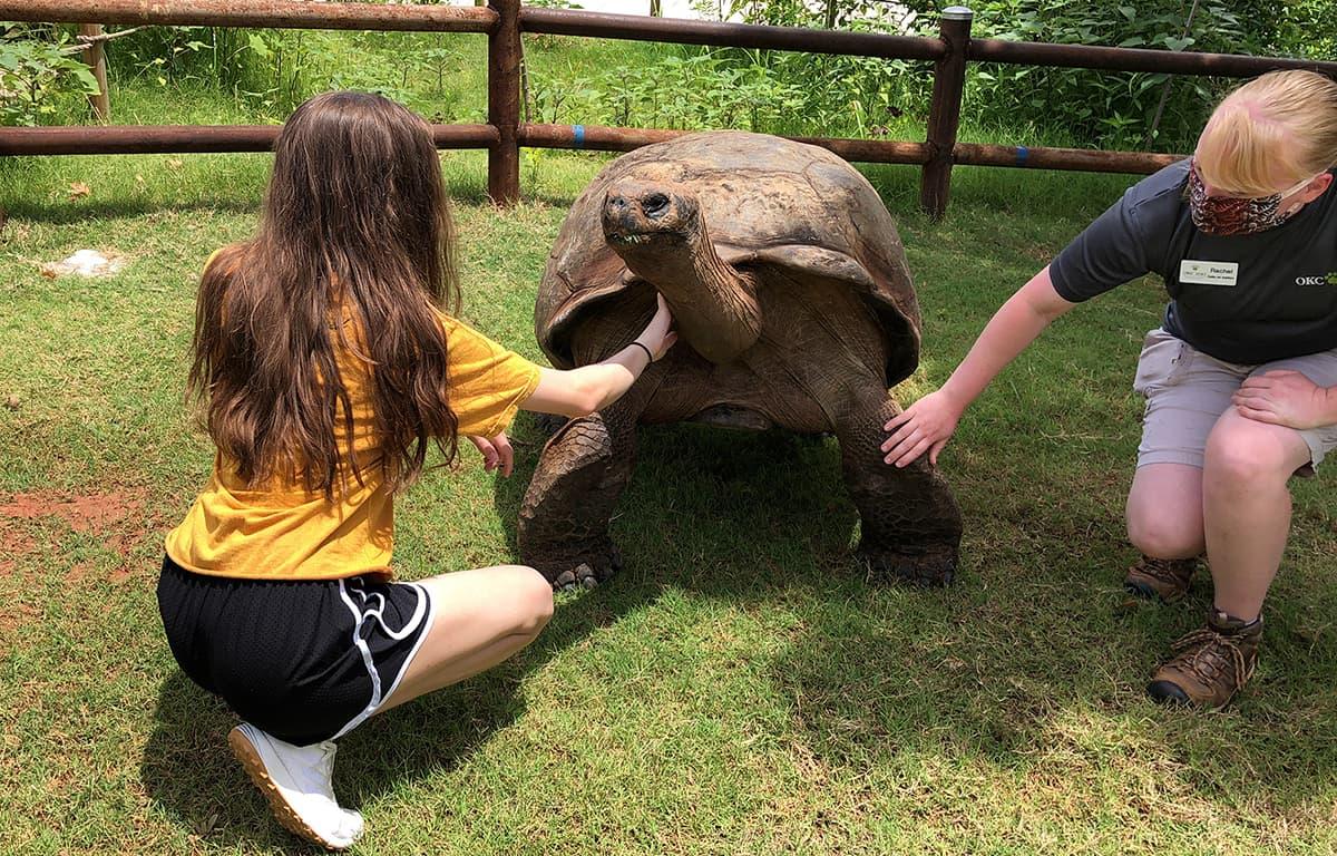 girl petting a Galapagos Tortoise