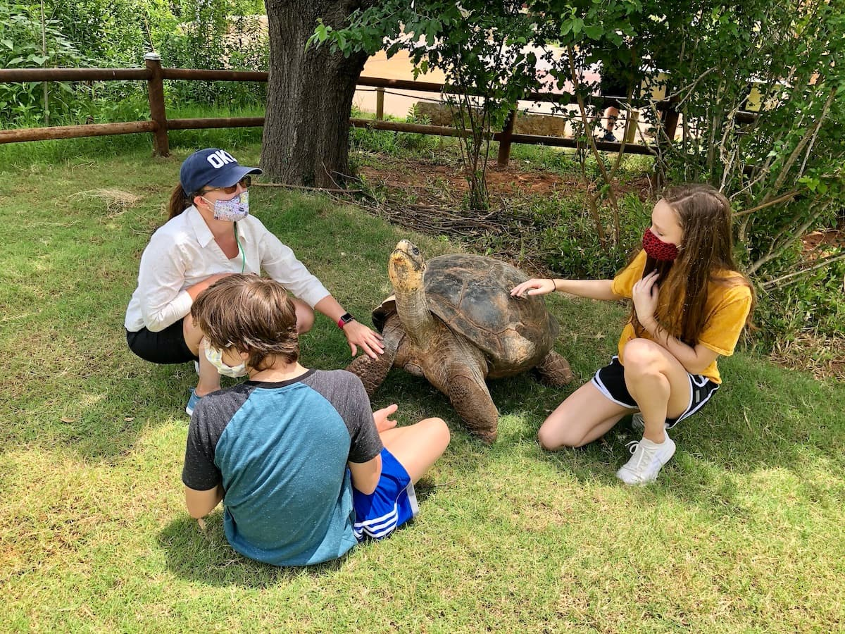 woman and teens petting a tortoise
