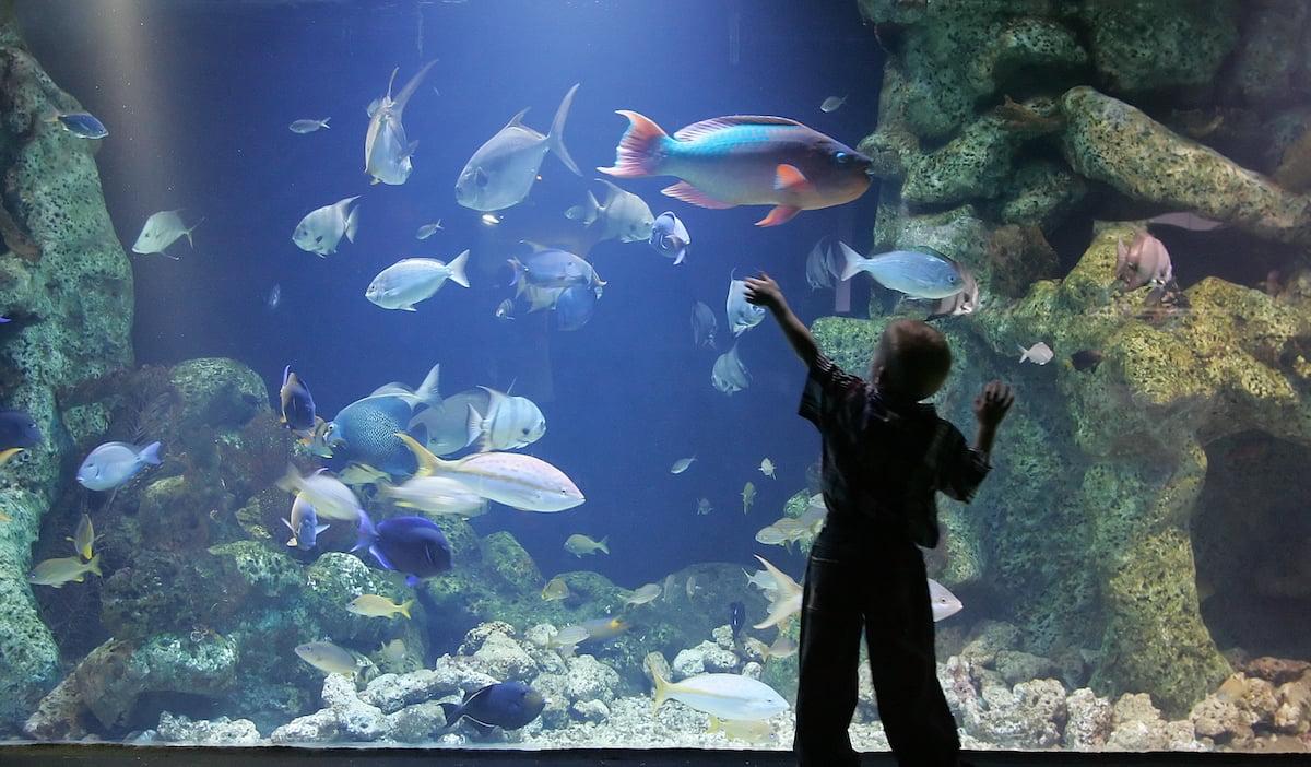 aquarium and boy
