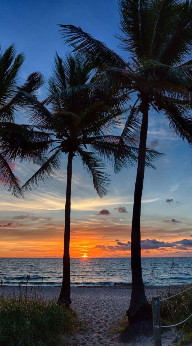palm trees sunrise beach