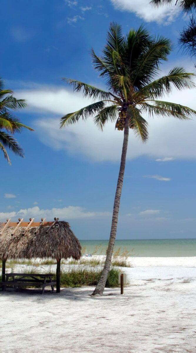 palm tree beach tropical hut