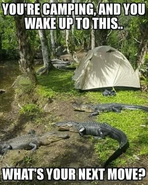 camping around alligators