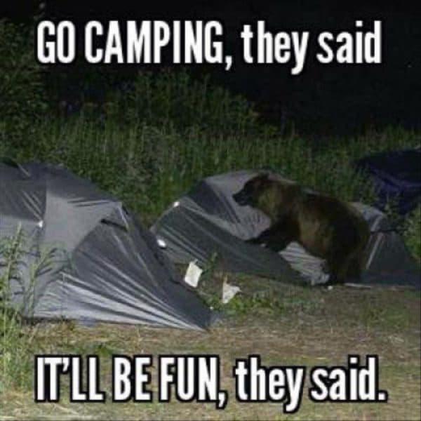 bear in capsite meme