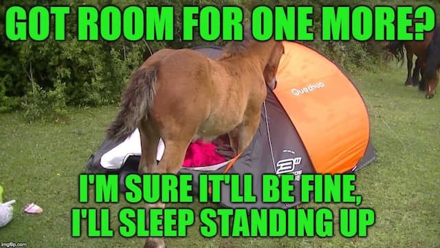 horse in tent