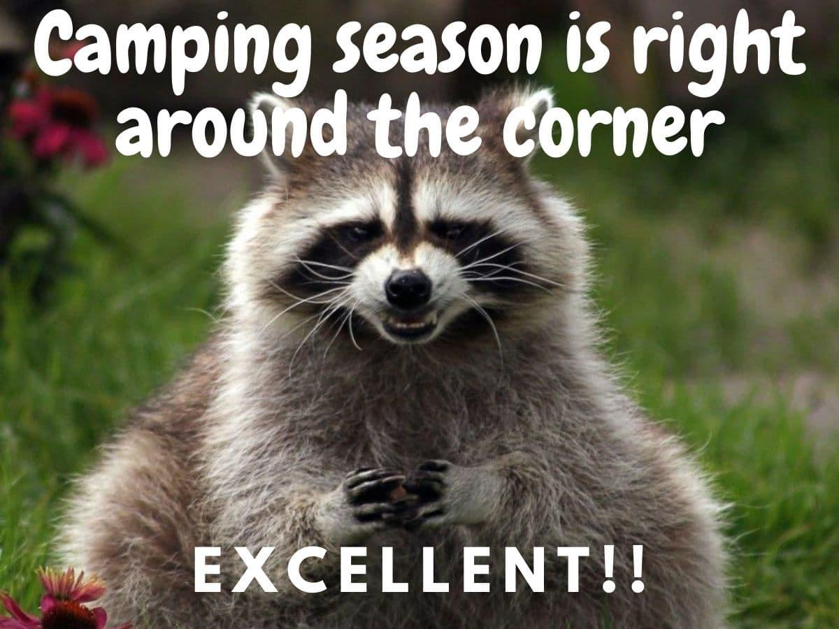 evil raccoon meme