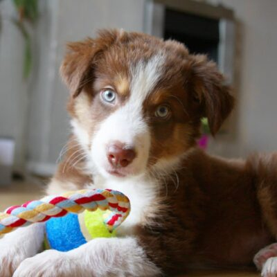 16 Essential Gifts for New Puppy Owners That Any Dog Would LOVE