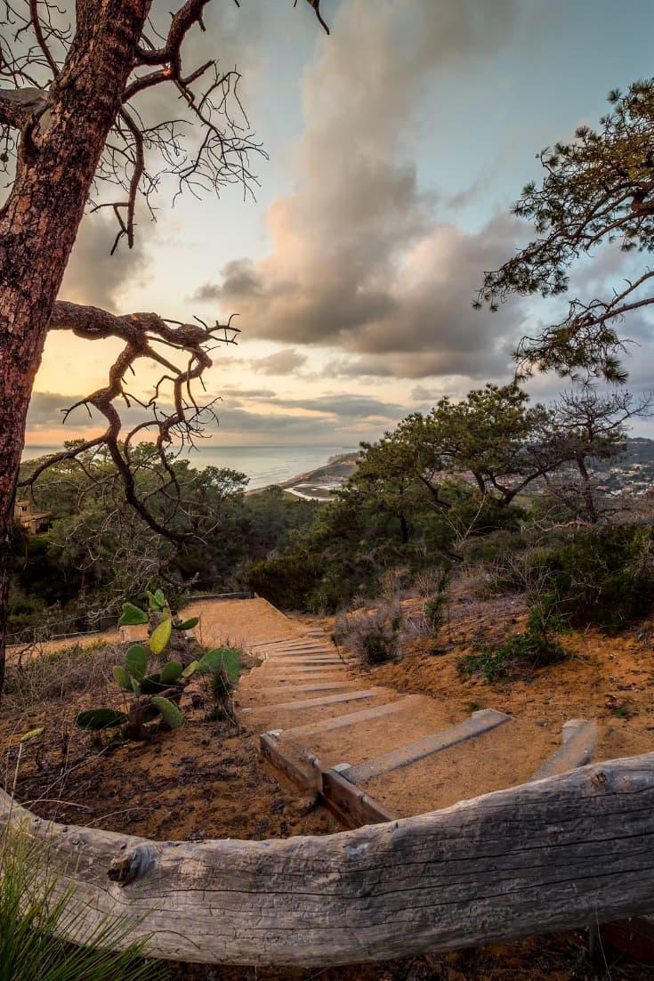 Torrey Pines scenery