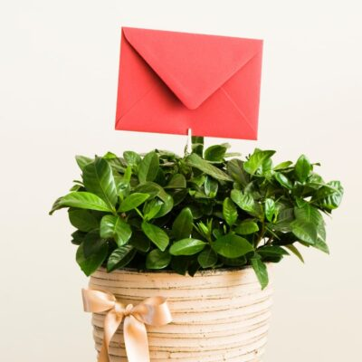 5 Ultimate Zero-Waste Gifts for Greener Giving