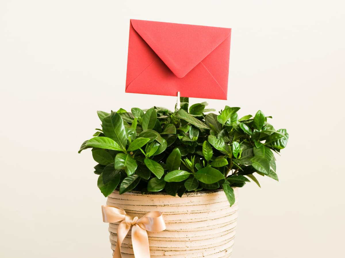 potted plant with card
