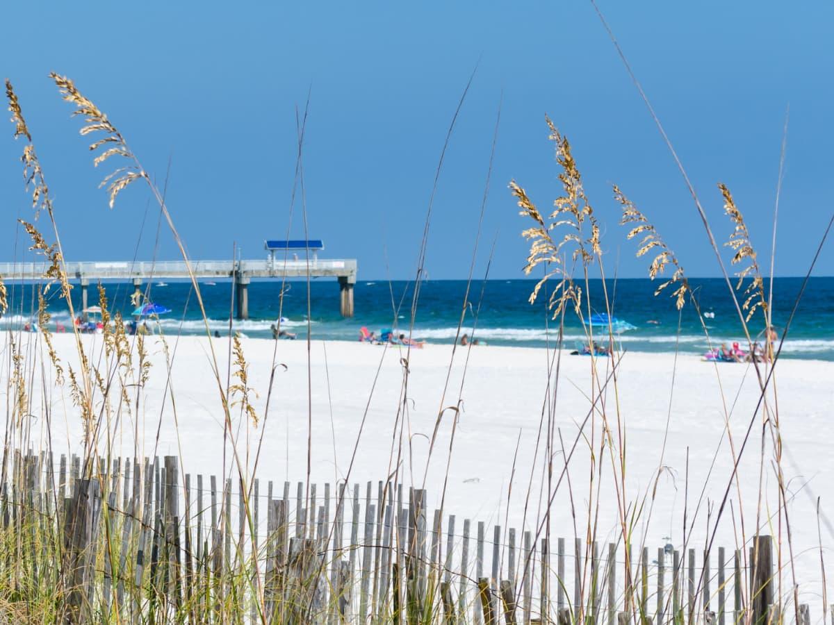 beach grasses and beach pier
