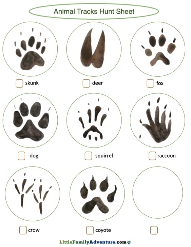 animal track checklist